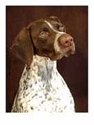 Shorthaired Prints - German Shorthaired Pointer 235 Print by Larry Matthews