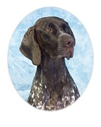 German Pointer Prints - German Shorthaired Pointer 664 Print by Larry Matthews