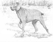 Jim Hubbard Prints - German Shorthaired Pointer Print by Jim Hubbard