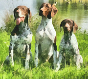 Pointers Posters - German Shorthaired Pointer Trio Poster by Patty Dunlap