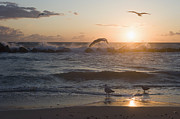 Surf Silhouette Prints - Germany, Mecklenburg Western Pomerania, Seagulls At Baltic Sea Print by Westend61