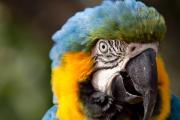 Blue And Yellow Macaw Prints - Get my best side Print by Carl Jackson