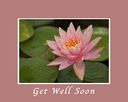 Pink Lotus Framed Prints - Get Well Pink Lotus Framed Print by Michael Peychich