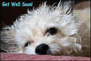 Get Well Wishes Prints - GET WELL SOON - Dog Print by Sarah Broadmeadow-Thomas