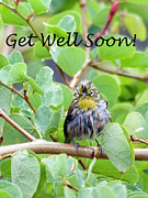 Japanese White Eye Posters - Get Well Soon Poster by Dan McManus