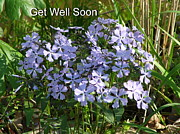 Lee Manning - Get Well Soon