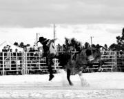 Rodeo Photo Posters - Gettin a Lift Poster by Christi Willard