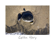 California Beach Art Framed Prints - Gettin Hairy Framed Print by Peter Tellone