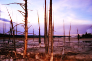 Kelly Reber - Geyser Basin Trees