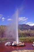 Geyser Prints - Geyser Calistoga Print by Garry Gay