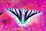 Colorful Photos Digital Art Prints - Ghost Butterfly Print by Nick Gustafson