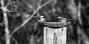 Bird-feeder Prints - Ghost Flight Print by Sari Sauls