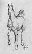 Horse Drawings - Ghost Horse by Angela Marks