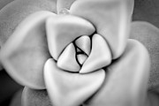 Ghost Petals Print by Pixel Perfect by Michael Moore