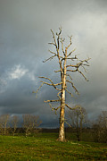 Ghastly Metal Prints - Ghost Tree Metal Print by Douglas Barnett
