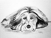 Collie Drawings Framed Prints - Gia Framed Print by Patricia Piffath
