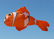 San Francisco Giant Framed Prints - Giant Clownfish Kite  Framed Print by Samuel Sheats