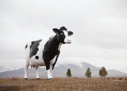 Las Vegas Nevada Prints - Giant Cow Sculpture Print by Paul Edmondson