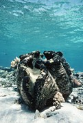 Water Filter Art - Giant Giant Clam by Georgette Douwma