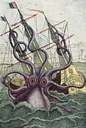 Creature Eating Framed Prints - Giant Octopus Framed Print by Denys Montfort