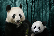 Black And White Digital Art Posters - Giant Pandas Poster by Julie L Hoddinott