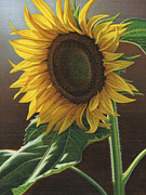 Steven Tetlow - Giant Sunflower