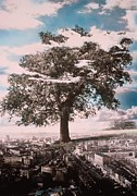 Rooftops Photos - Giant Tree in City by Hag