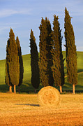 Marco Carmassi - Giants and wheat