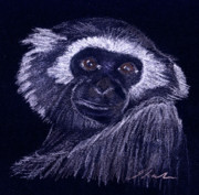 Ape Drawings Posters - Gibbon Poster by Julie L Hoddinott
