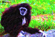 Monkey Digital Art Prints - Gibbon Print by Wingsdomain Art and Photography