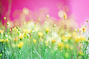 Wildflower Photos Prints - Giddy in Pink Print by Amy Tyler