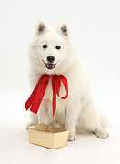 Japanese Dog Photos - Gift Dog by Mark Taylor