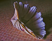Sea Shell Prints - Gift from the Sea Print by Bonnie Bruno