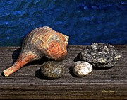 Sea Shell Digital Art Posters - Gifts from the Sea Poster by Dale   Ford