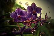 Orchids Digital Art - Giggles by Joanne Smoley