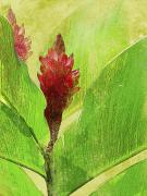Botanical Art Mixed Media - Gingimbre by Kaypee Soh - Printscapes