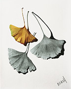 Pencil Drawing Posters - Ginkgo Leaves Poster by Garry McMichael