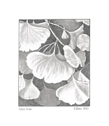 Botanical Drawings - Ginko Biloba by Kathy Burns