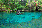 Great Digital Art Originals - Ginnie Springs by Barbara Bowen