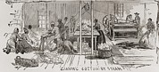 Slavery Prints - Ginning Cotton By Steam Powered Gin Print by Everett