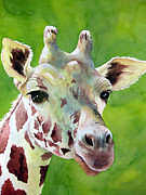 Watercolor Print Framed Prints - Giraffe Framed Print by Cherilynn Wood