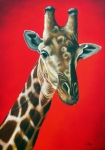 Giraffe Framed Prints - Giraffe Framed Print by Ilse Kleyn