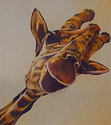 Yellow Drawings Originals - Giraffe by Joan Pollak