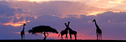 Giraffe On Horizon Print by Tim Booth