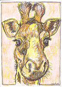 Colored Pencils Drawings Prints - Giraffe Postcard Print by Michele Hollister - for Nancy Asbell