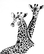 Animal Drawings Posters - Giraffes Poster by Cheryl Poland