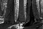 Old Trees Prints - Girl and Giants Print by Olivier Steiner
