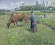 Crop Painting Prints - Girl Tending a Cow in Pasture Print by Camille Pissarro