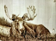 Alaska Moose Pyrography - Give Me A Break by Adam Owen