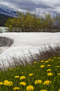 Montana Landscapes Photographs Posters - Glacier Sherburne Lake Spring Poster by Larry Darnell
